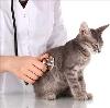Ветеринарные клиники в Чусовом